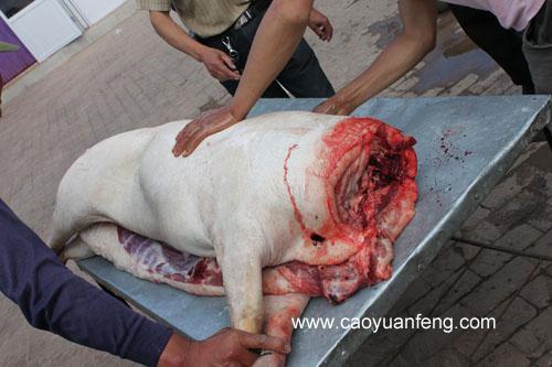 农家院杀猪全过程