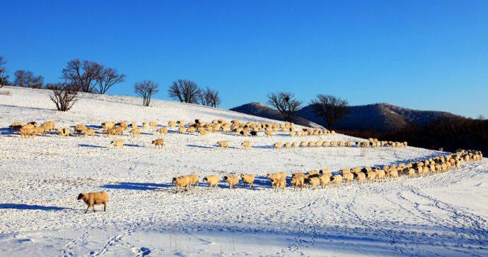 坝上四季风光美景之冬季摄影