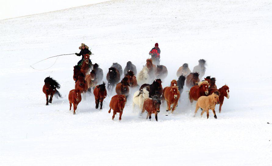 坝上草原马踏飞雪