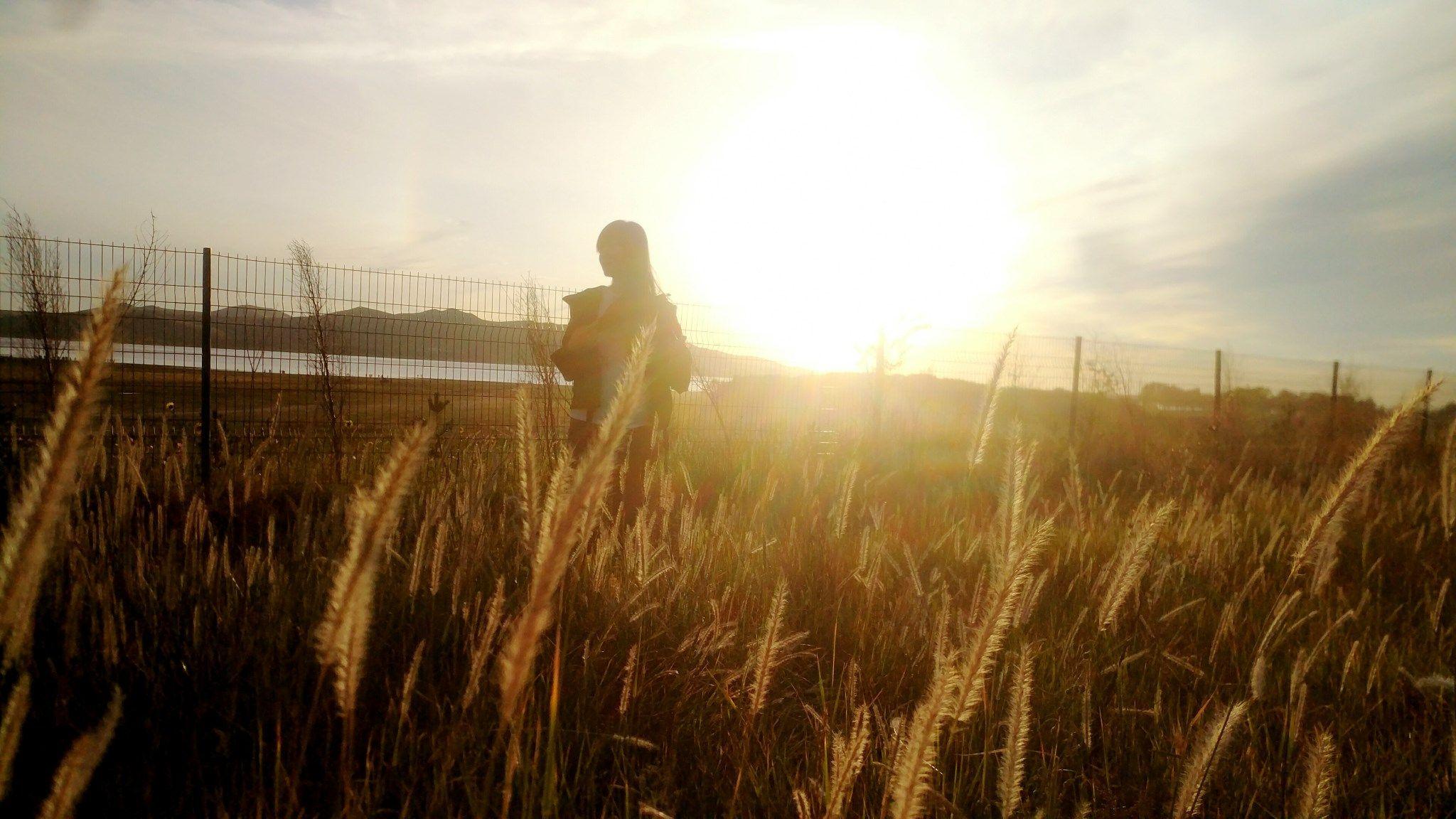 合欢视频下载安装污丰宁坝上草原,丰宁京北草原