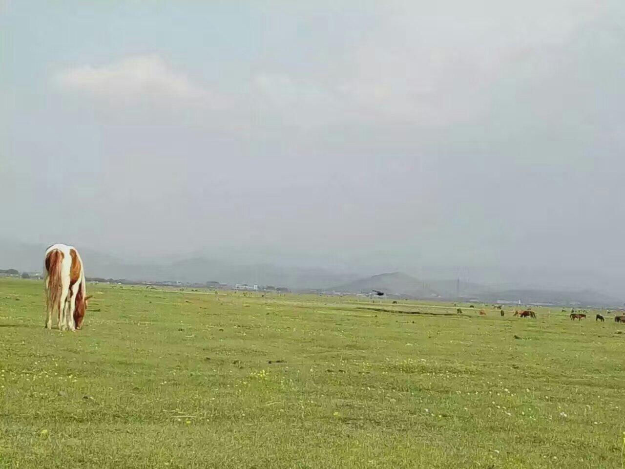 草原上刚刚出生几天的小马驹